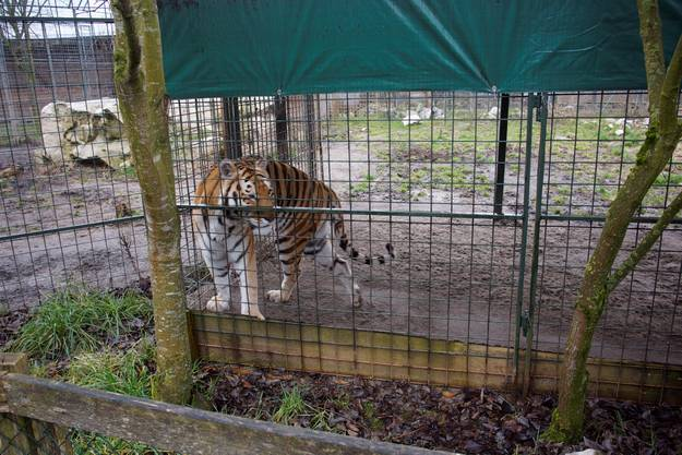 Eines der Tiere, das im Park lebt.