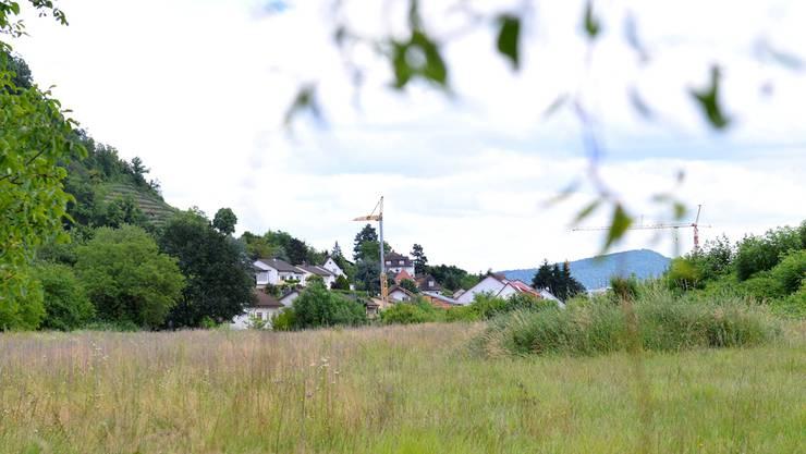 Das zum Bau der Wohnungen vorgesehene Areal in Grenzach, Blick Richtung Südosten. Links der Anstieg zum Hornfelsen. Nicole Nars-Zimmer