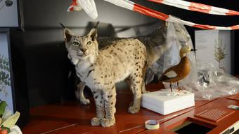 Neue Ausstellung im Naturmuseum Solothurn