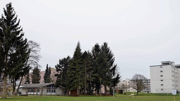 Gleich neben dem bestehenden Kindergarten soll ein 600'000 Franken teures Provisorium entstehen.