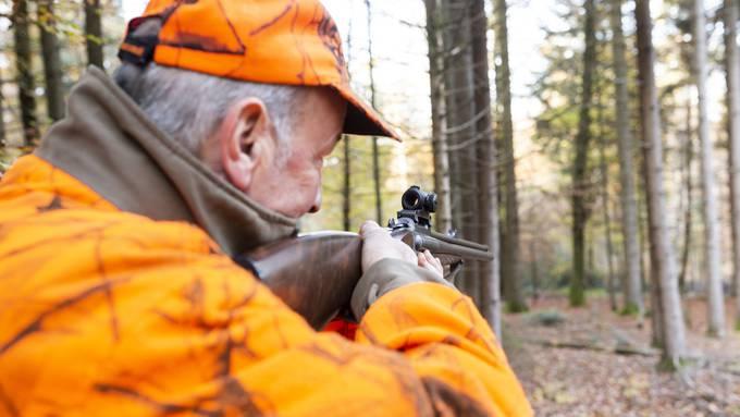 Bei der Jagd im Wald soll im Baselbiet künftig der Tierschutz höher gewichtet werden. (Symbolbild)