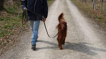 Jetzt haben die Menschen mehr Zeit für Spaziergänge: Die Hunde werden nicht nur am Wochenende ausgeführt. (Symbolbild)