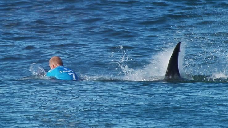 Vorsicht, Hai: Im vergangenen Jahr wurden weltweit 98 Hai-Angriffe auf Menschen registriert.