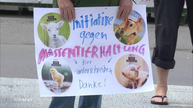 Tierschutzorganisatoren lancieren Volksinitiative gegen Massentierhaltung