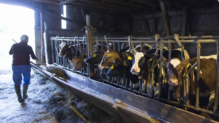 Gas aus der Jauchegrube hat in Domat/Ems GR fünf Rinder getötet und drei Personen in Lebensgefahr gebracht. (Symbolbild)