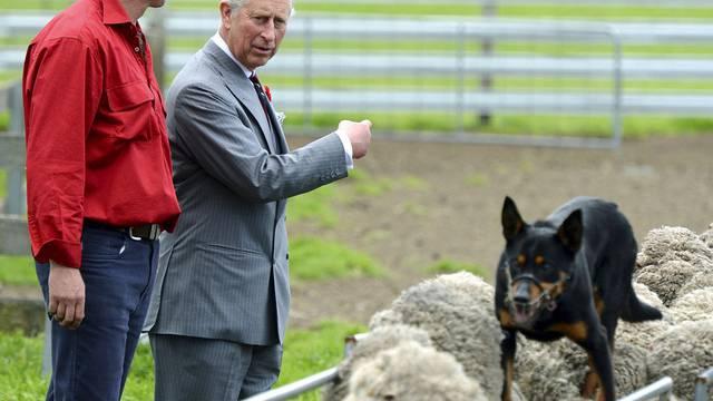 Prinz Charles lässt sich die Arbeit eines Schafzüchters erklären