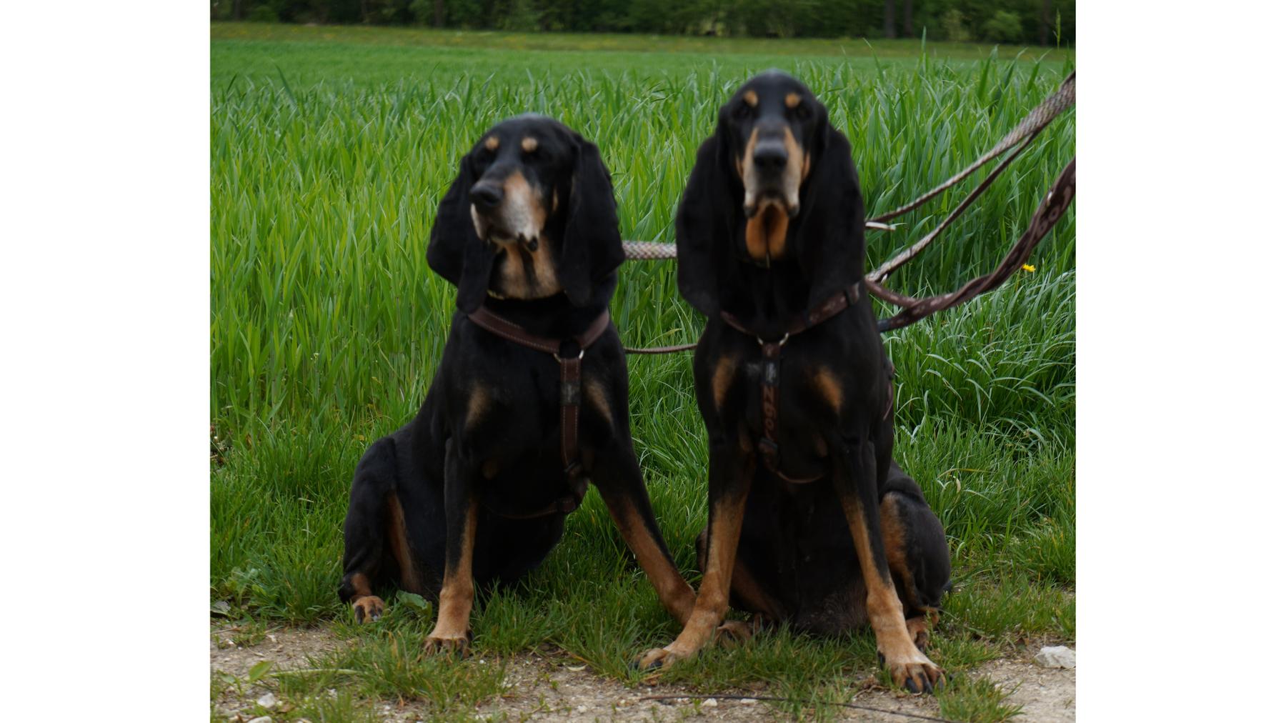 Arkon & Arthos