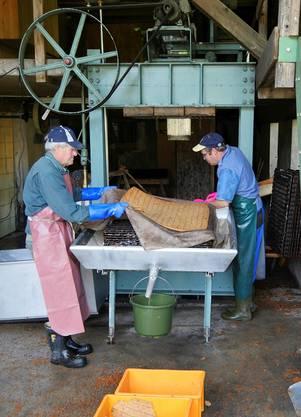 In den kommenden Tagen wird in der «Fledermosti» in Hellikon wieder Apfelsaft gepresst.