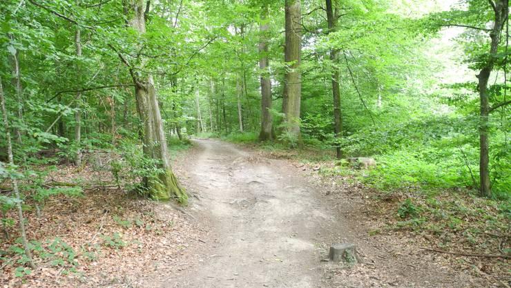Die illegalen Trails der Biker sind an einigen Orten bereits sehr breit.