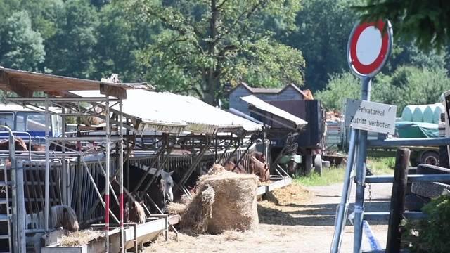 Der Tierarzt zum Thurgauer Fall von mutmasslicher Tierquälerei