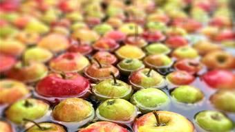 Herbstzeit ist die Zeit der bunten Früchte und Gemüse. Auch im Schaugewächshaus des Reussparks finden viele spannende Events dazu statt.