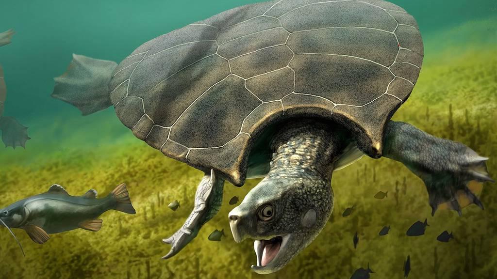 Zürcher Forscher finden Überreste von Riesenschildkröte mit Hörner-Panzer