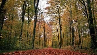 Der Herbst 2020 – hier in Rheinfelden – zeigte sich über weite Strecken sonnig.