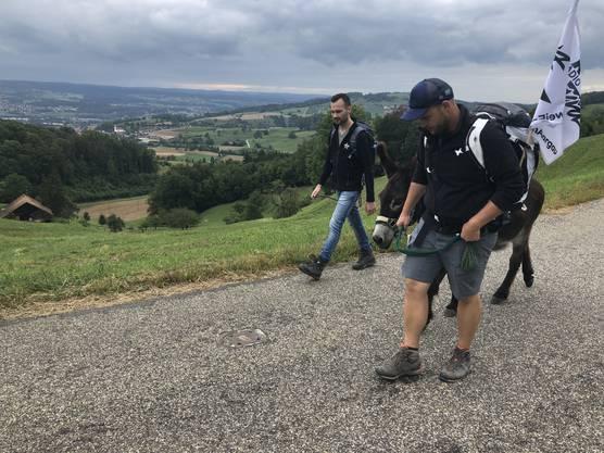 Drei Esel im Aargau: Heute wurden unsere zwei Esel von Moderator André Sauser begleitet.
