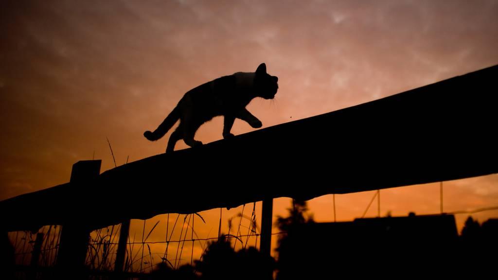 Schwarze Katze im Abendlicht