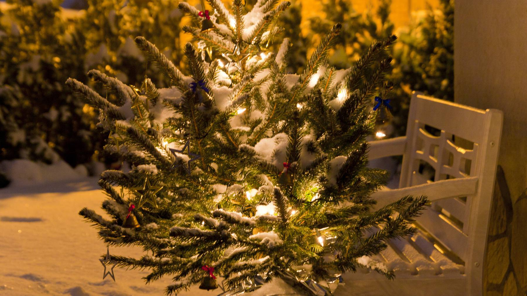 Weihnachtsbaum geklaut