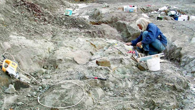 Paläntologe Ben Pabst bei Ausgrabungen in der Fricker Tongrube