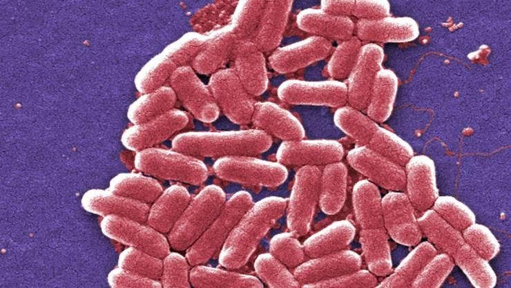 Ein E-Coli-Bakterium, das gegen sämtliche Antibiotika resistent ist, wurde erstmals in den USA bei 49-Jährigen gefunden. (Archivbild)