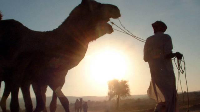 Oft Opfer von Zwangsarbeit: Kameltreiber in der Wüste (Symbolbild)