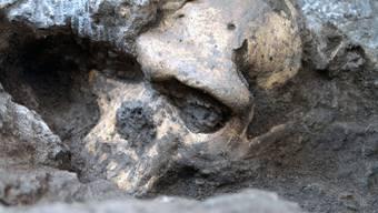 Schädelfunde führen zu neuen Erkenntnisse über die menschliche Vergangenheit