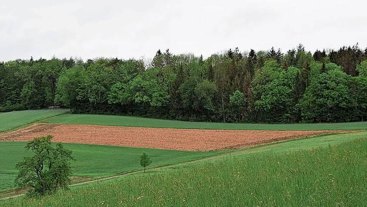 Spaziergänger fragen sich, ob dieses Feld legal mit Pestiziden gespritzt wurde.