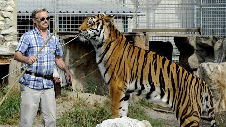 René Strickler mit einem seiner Tiger. (Archiv)