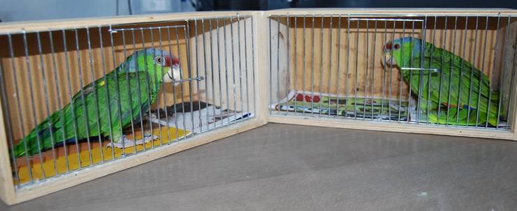 Zwei Papageien wurden im Fach des Reserverades versteckt, um in die Schweiz geschmuggelt zu werden.
