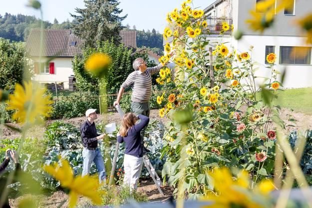 Gemeindeammann Hanspeter Gehrig (auf der Leiter) und Vizeammann Marianne Horner zählen die Blüten, während Mark Koller die Zählung protokolliert