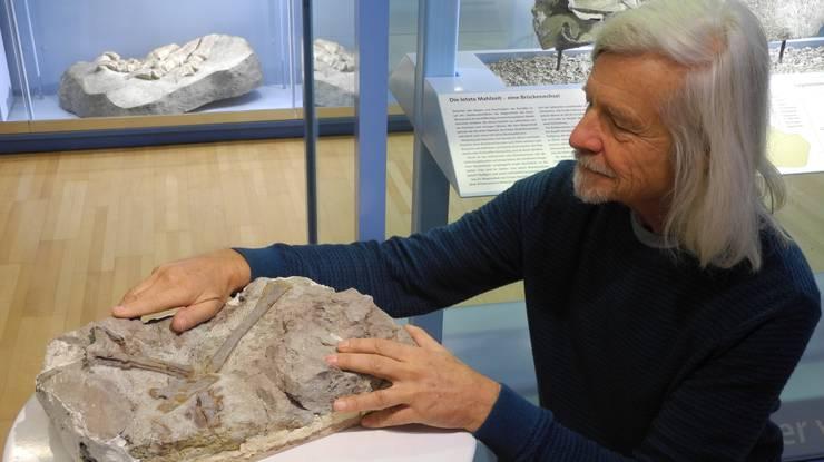 Grabungsleiter Ben Pabst hat den Fuss des neu gefundenen Raubsauriers bereits präpariert. Er wird ab sofort im Fricker Sauriermuseum gezeigt.