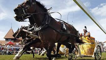 Ein Teilnehmer treibt beim Römerwagenrennen am Marché-Concours seine Pferde an