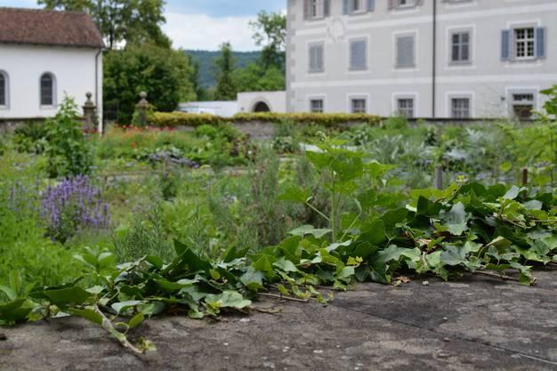 """Schwester Beatrice mag ihren Garten wild. """"Sterile"""" Gärten sind nichts für sie."""