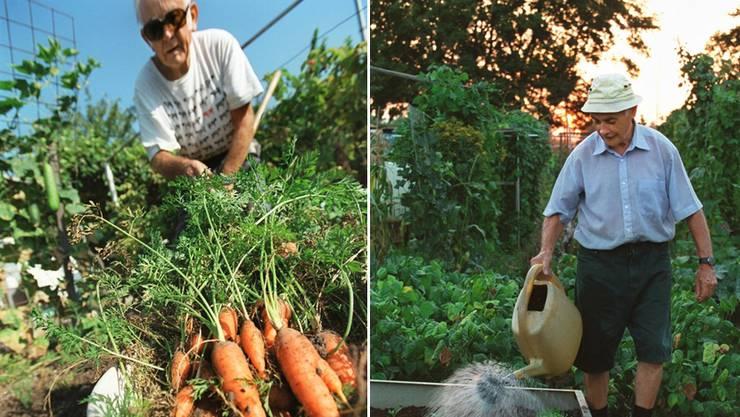 «Praktikantenfurz» als Aprilscherz: Was im Garten geerntet wird, muss ab heute versteuert werden.