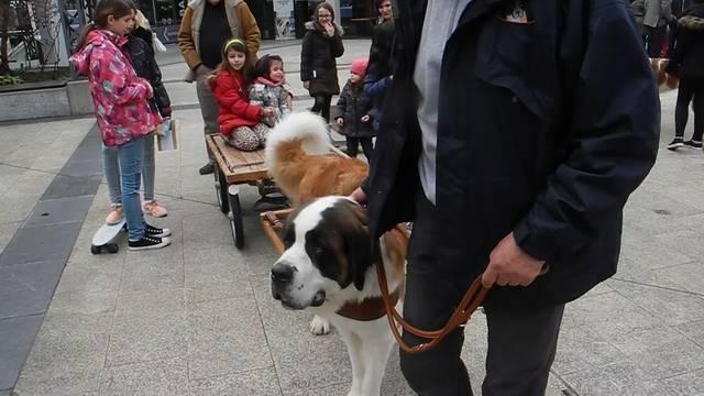 Wenn Mensch und Hund und Hund und Hund sich begegnen ...