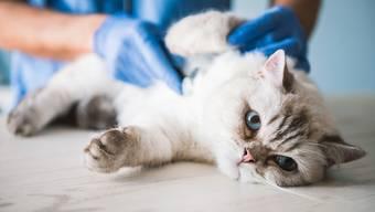 Allergien zählen zu den häufigsten Gründen für Tierarztbesuche.
