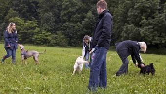 Auf Bundesebene ist der Hundekurs nicht mehr obligatorisch. (Symbolbild)