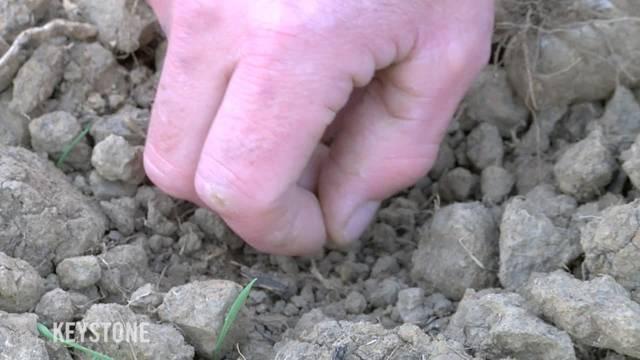 Trockenheit macht Bauern zu schaffen: Ohne Regen müssen die Landwirte mit hohen Verlusten rechnen.