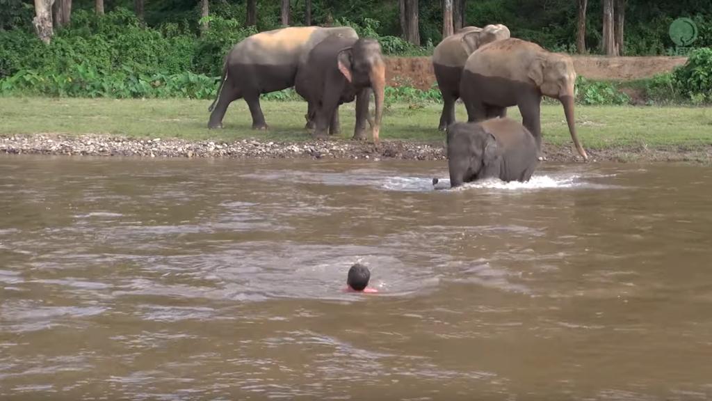 Der Babyelefant versucht zu helfen (youtube/elephantnews)