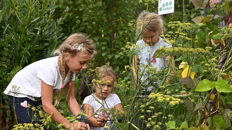 Das Projekt «Gartenkind» neigt sich in Balsthal langsam dem Ende zu.