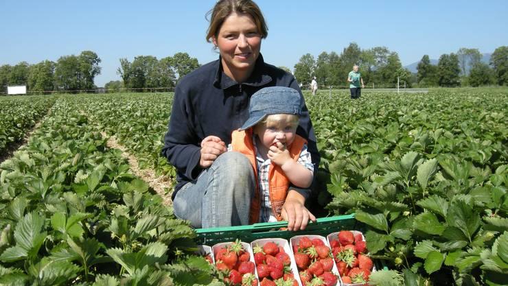 Die Erdbeer-Ernte wird nicht mehr so reichlich ausfallen. (Archiv)