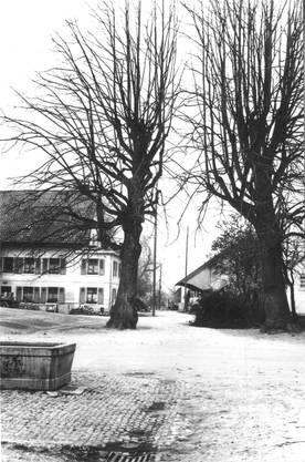 Die Linde in einer Aufnahme von 1934.