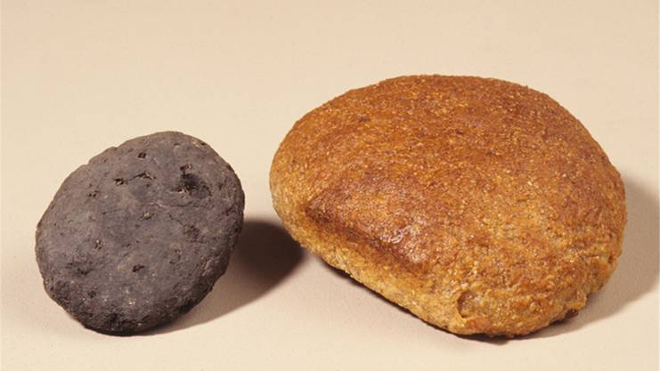 Ganze 15 Jahre stellte das Museum für Urgeschichte in Zug ein Brot aus der Steinzeit aus. Als man es genauer untersuchte, tippte man auf Kot. Schliesslich erkannte man: Der Klumpen ist ein Stück Torf.