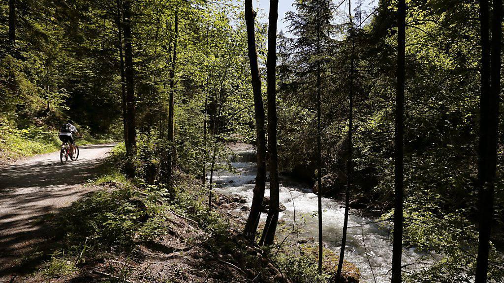 Wegen Besucheransturm: Stärkere Aufsicht in Wäldern