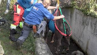 Oroyas Ausflug ende im Bärengraben. Diesen hat sie wohl nicht gesehen, wie Zoo-Direktor Alex Rübel gegenüber Tele Züri sagt.