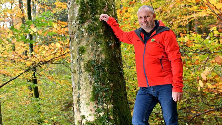 Revierförster Georg Nussbaumer mit seinem Lieblingsbaum, einem rund 30 Jahre alten Bergahorn ob Trimbach