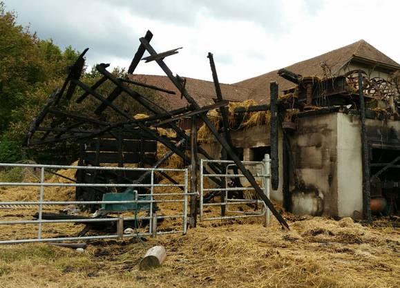 Direkt neben dem Schopf waren noch Ponys und Geissen untergebracht. Sie wurden gerettet. Ein neuer Zaun musste gebaut werden.
