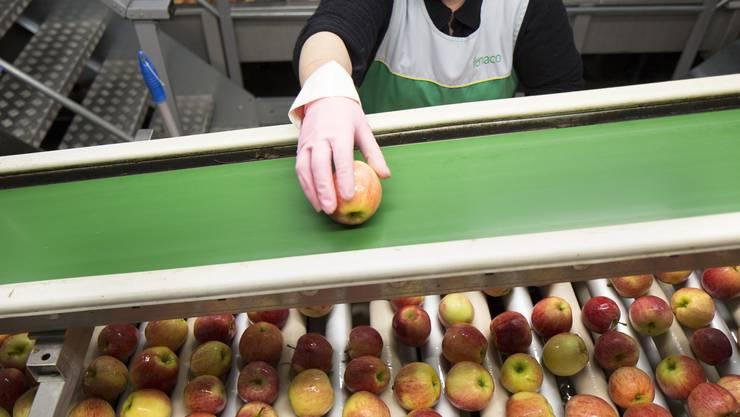 Die Firma Leman Fruits lagert, sortiert und verpackt für die Fenaco Äpfel. Der Agrarriese hat über 80 Firmen unter seinem Dach vereint.