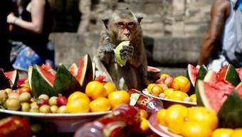 «Erst kommt das Fressen, dann kommt die Moral» – sollten wir Menschen es nicht besser wissen?
