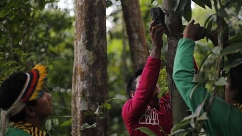 Ka'apor-Indianer installieren eine Kamera im Regenwald. Beim Widerstand gegen die illegale Regenwaldabholzung kommt es auch zu Gewalt - mehrere Menschen kamen bereits ums Leben.