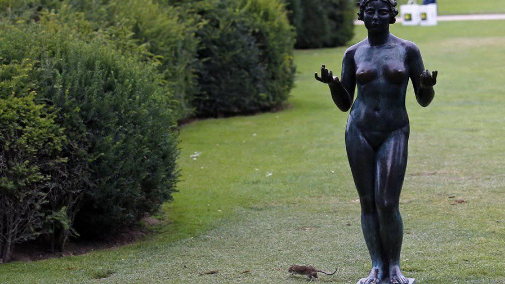 Eine Ratte rennt im Pariser Jardin des Tuileries hinter einer Statue durch. Frankreichs Hauptstadt will künftig den Kampf gegen die Nager verstärken. (Archiv)