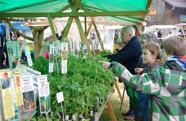 50 verschiedene Sorten Tomatensetzlinge an diesem Stand im Jurapark-Dorf Wegenstetten.